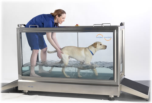 Dog Treadmills For Sale In Ireland